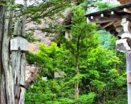 Houses & Trees - Shirakawa-Go